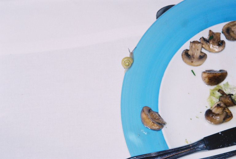 snail on plate